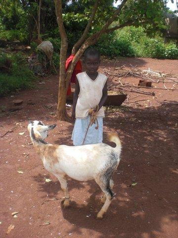 Image for: Goats for the Orphans